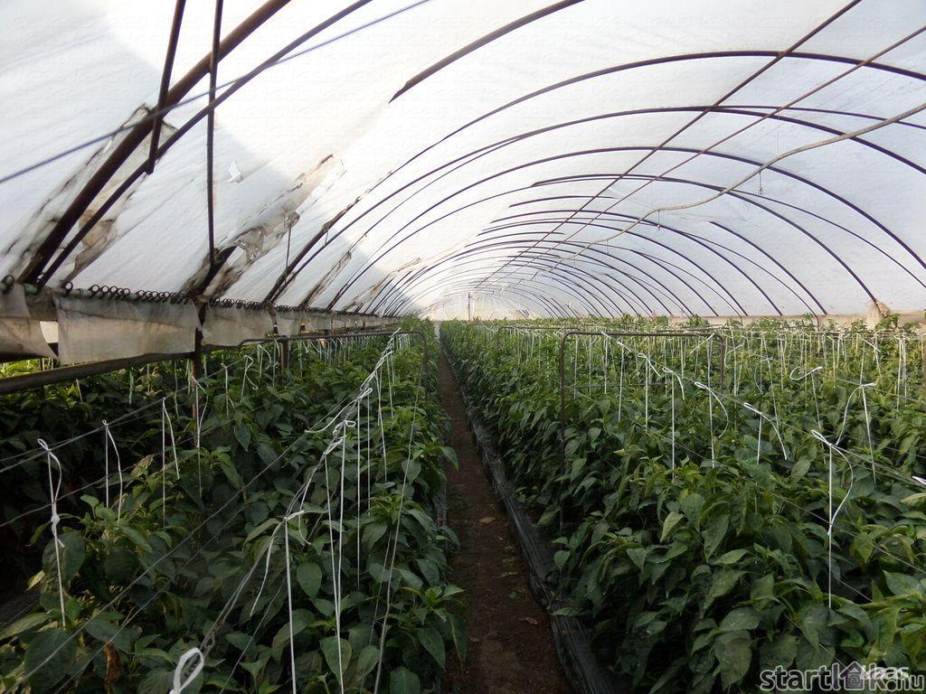 Kertészet Kiskundorozsmán